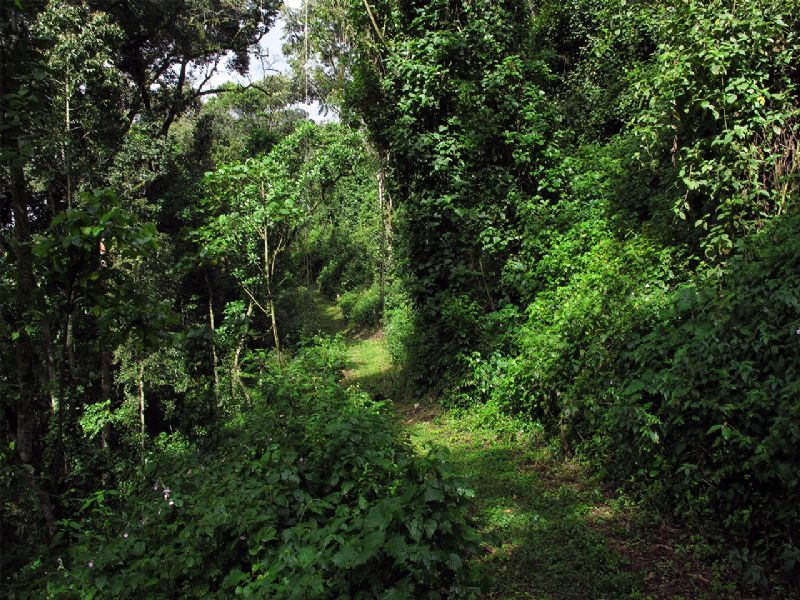 Image result for Bwindi Impenetrable Forest National Park